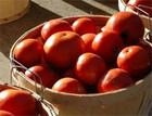 Tomatoes_basket