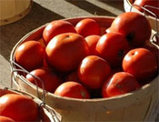 Tomatoes_basket_1